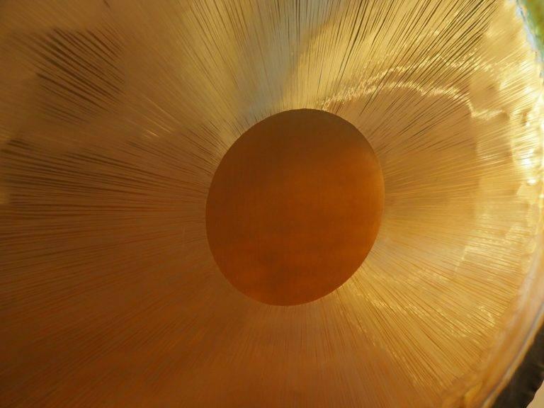 klangreise und gongmeditation